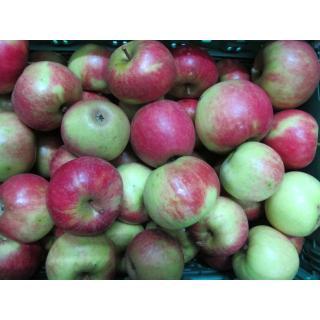 Apfel Elstar (süß)