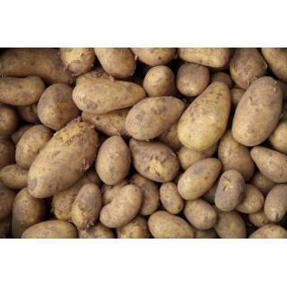 Kartoffel Goldmarie lose (fest)