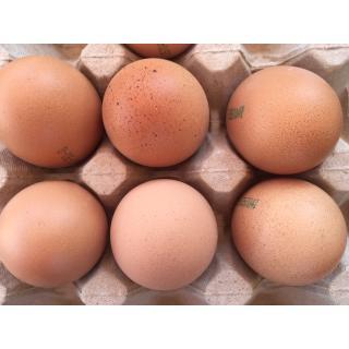 M-Eier 10 Stück